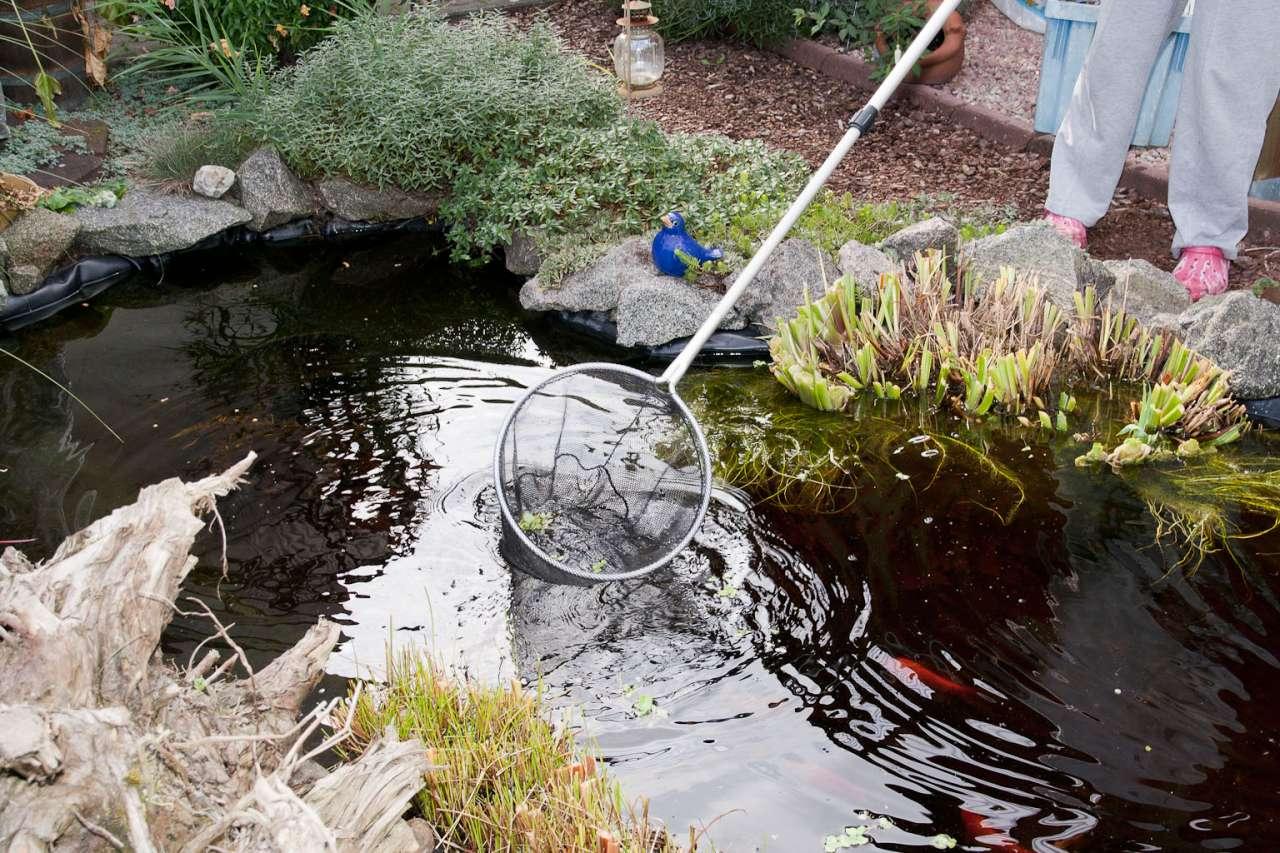 Algen und Laub mit einem Teichkescher entfernen